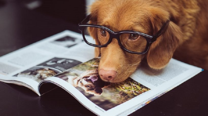 Photography magazines, focus and shoot!